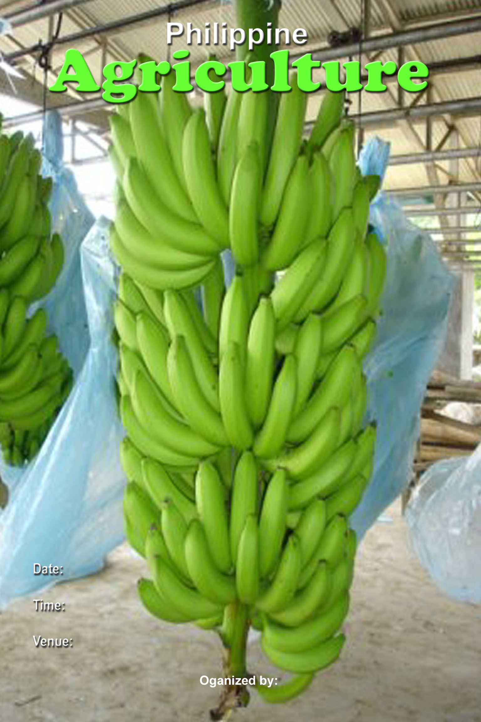 philippine-agriculture-template-copy - Philippine Banana Export - Philippine Photo Gallery