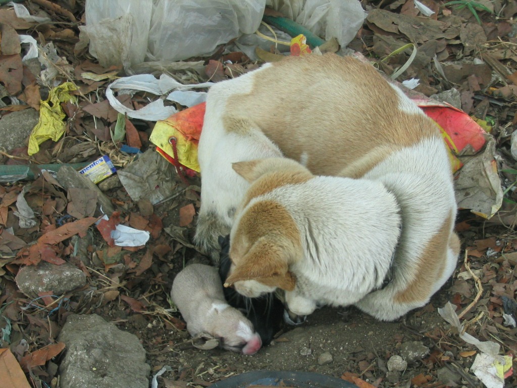 pictures-007 - Stray dogs - Philippine Photo Gallery