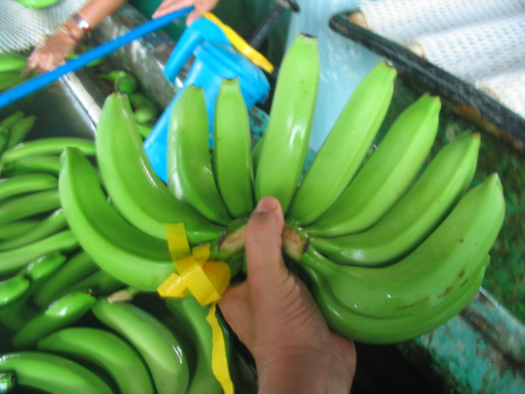 banana philippine Health benefits of bananas (naturalnews) so often, the humble banana is often overlooked when it comes to providing nutritional and medicinal valueread more.