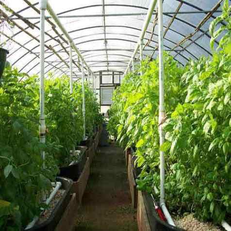 Israel green house technology11
