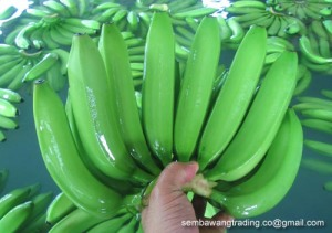 1 Cavendish Banana origin Philippines