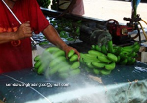 9 Power hose extra cleaning on bananas before tub