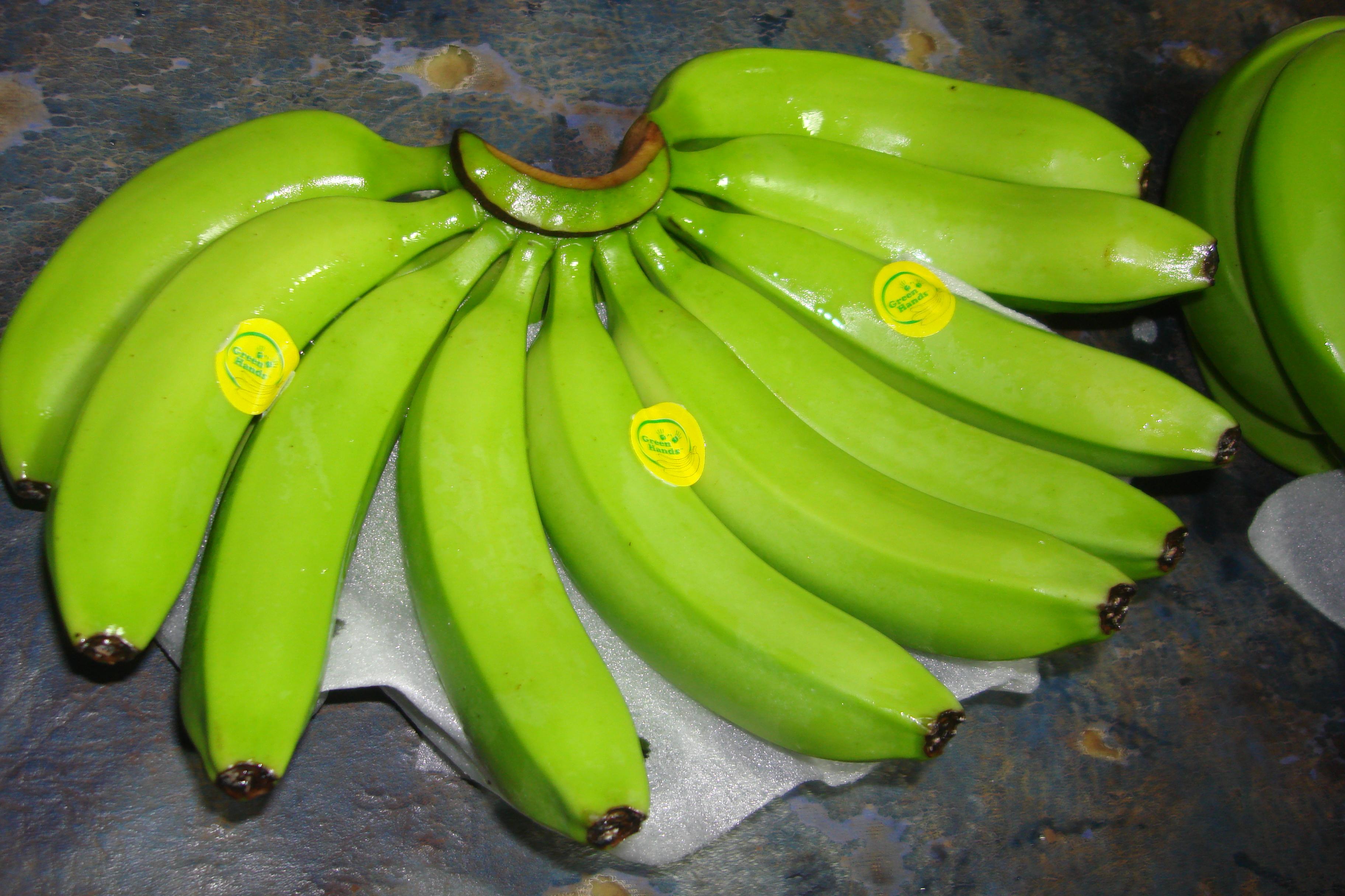 Banana Export Earns Lucratively | fyi
