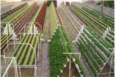Soil less and Space less farming