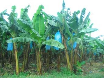 good-plant-2