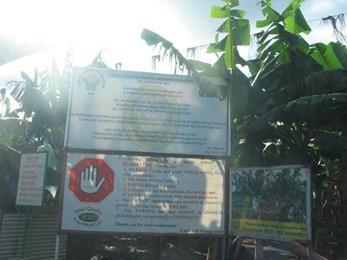 quaranteen-plantation-area